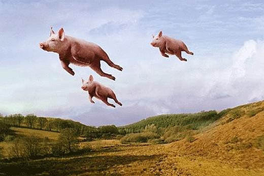 flyingpigs
